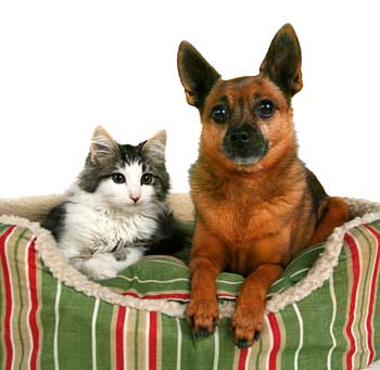 Pets and Moving and Relocation